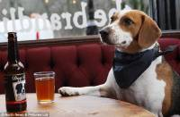 Public houses and restaurants that accept dogs